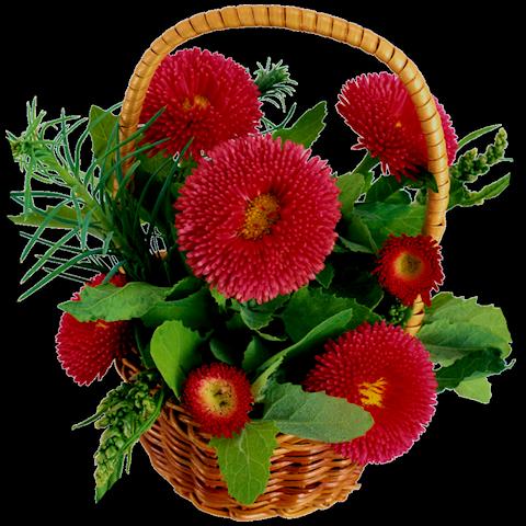 Цветы в корзинке - Цветы анимация