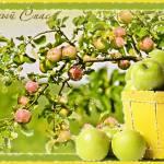 660 виул и яблоко (2-й Спас)